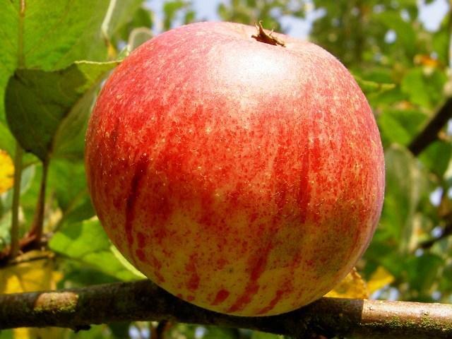 Fruitbomen natuurpad Schapendrift