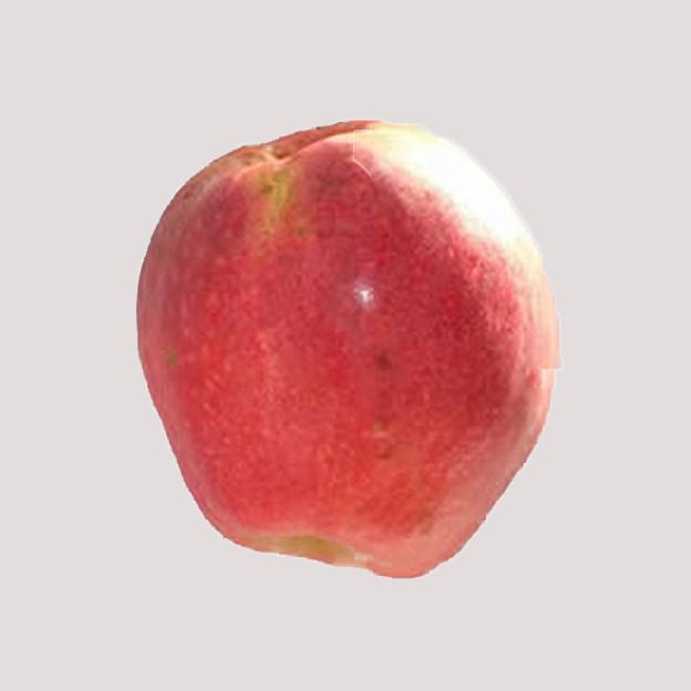 Fruitbomen Beleefpark